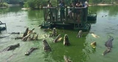 Farma krokodila